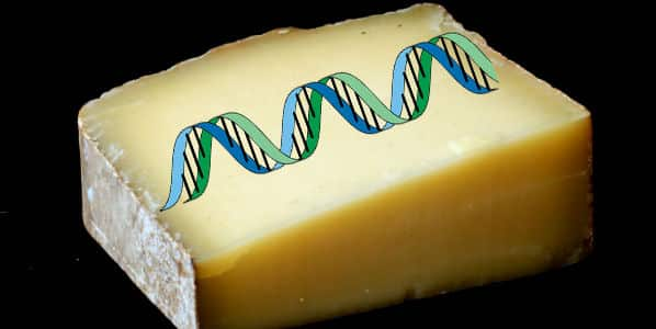Cheese-DNA