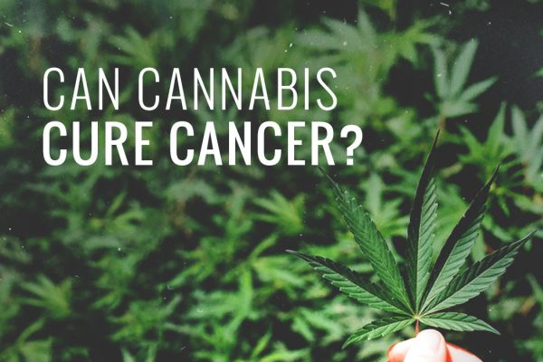 can-cannabis-cure-cancer