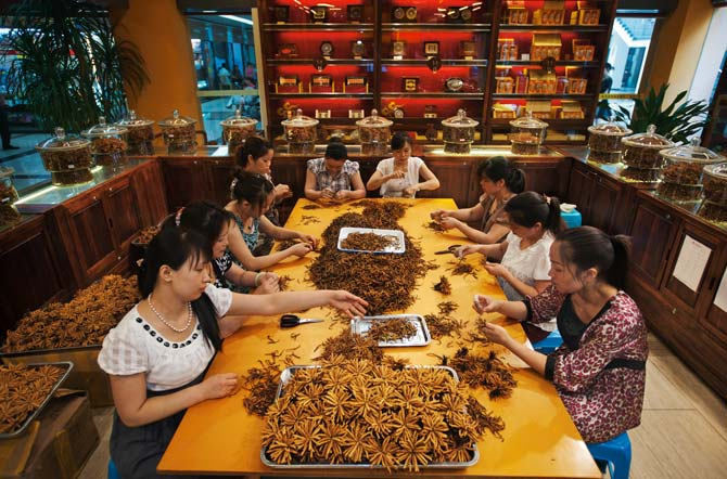 Cordyceps being bundled in a Cordyceps store in Chengdu's He Hua Chi Market. Photo Daniel Winkler, May 2010.