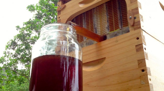 honey-on-tap-flow-hive-stuart-cedar-anderson-5-e1424785767601