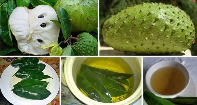 How-to-Use-the-Leaves-of-Soursop-to-Kill-Cancer-Cells-1000-Times-Stronger-Than-Chemotherapy