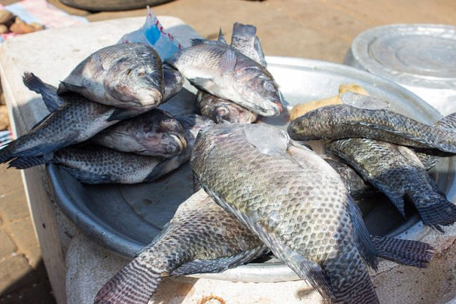 Health experts are warning people to stop eating tilapia for Is tilapia a healthy fish to eat