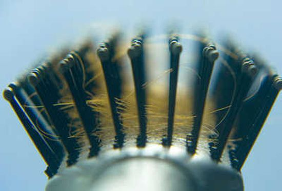 Photolibrary rf photo of hairs in brush
