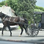 Amish Man Gets Six-Year Prison Sentence For Growing And Selling His Own Herbal Remedies