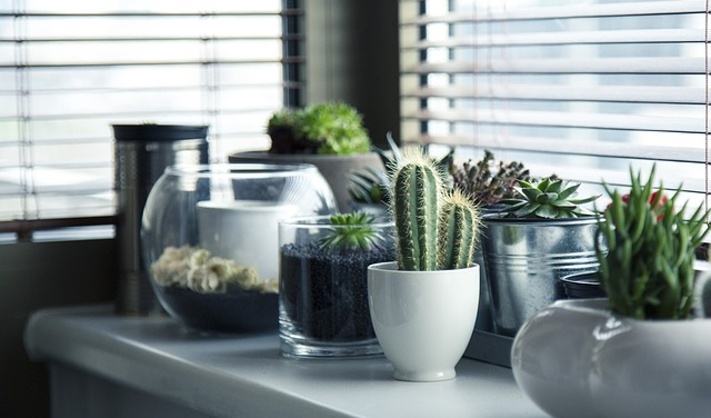 5 steps towards having a spotless home that is free from dangerous germs and toxins