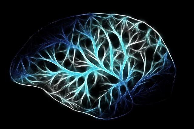 Maxpixel freegreatpicture com biology think networking physiology brain anatomy