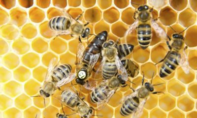 5 reasons bee conservation is important