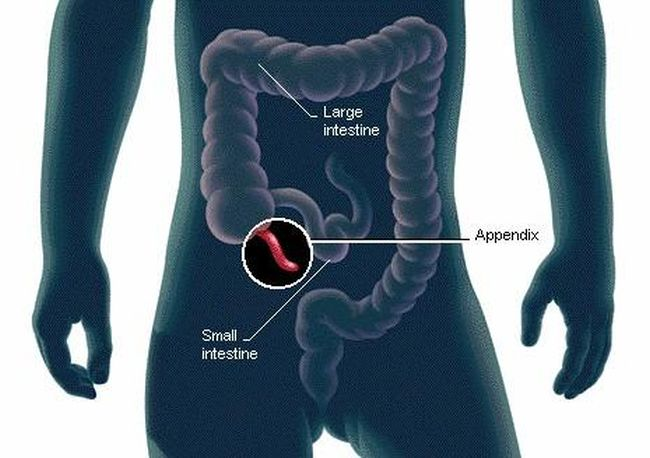 Scientists finally discovered the function of the human appendix