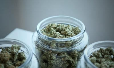 Treating Pneumonia And Lung Disorders With Medical Marijuana 7